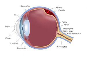 o que é e onde fica a retina?
