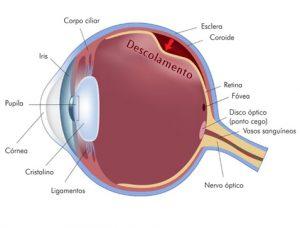 tratamento para descolamento de retina em crianças em curitiba